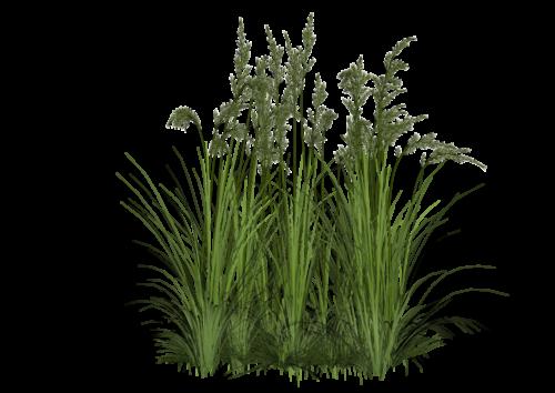 grass png zip download