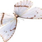 beautiful butterfly png