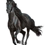 horse png download