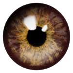 brown eyes png
