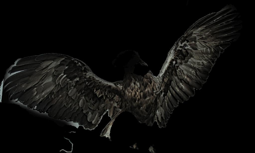 black wings pngs