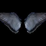 bird wing png