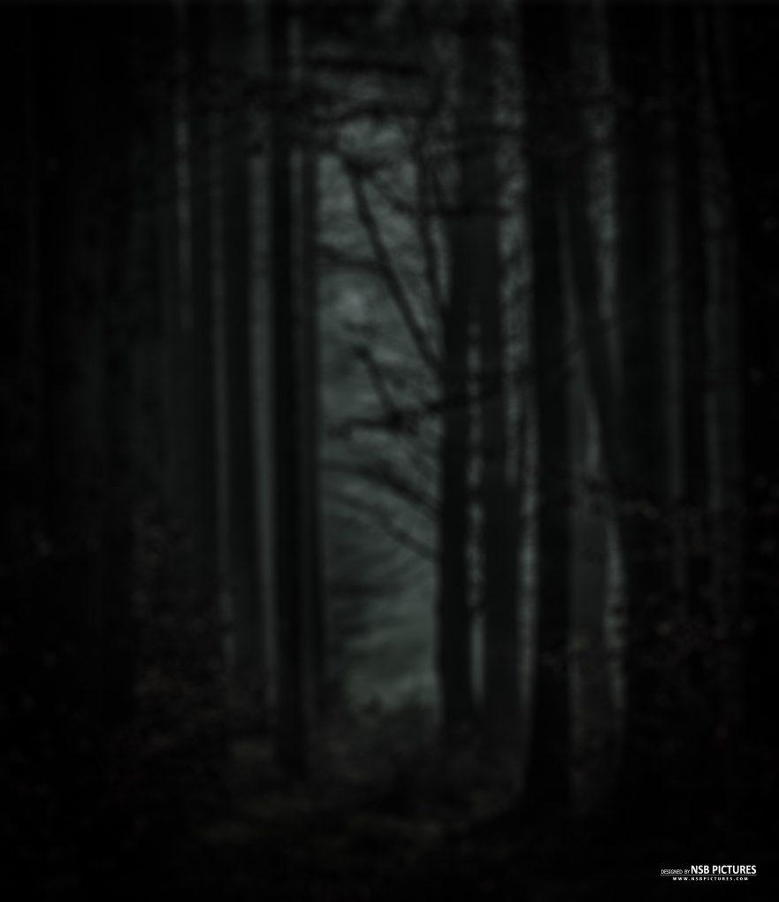 dark trees background