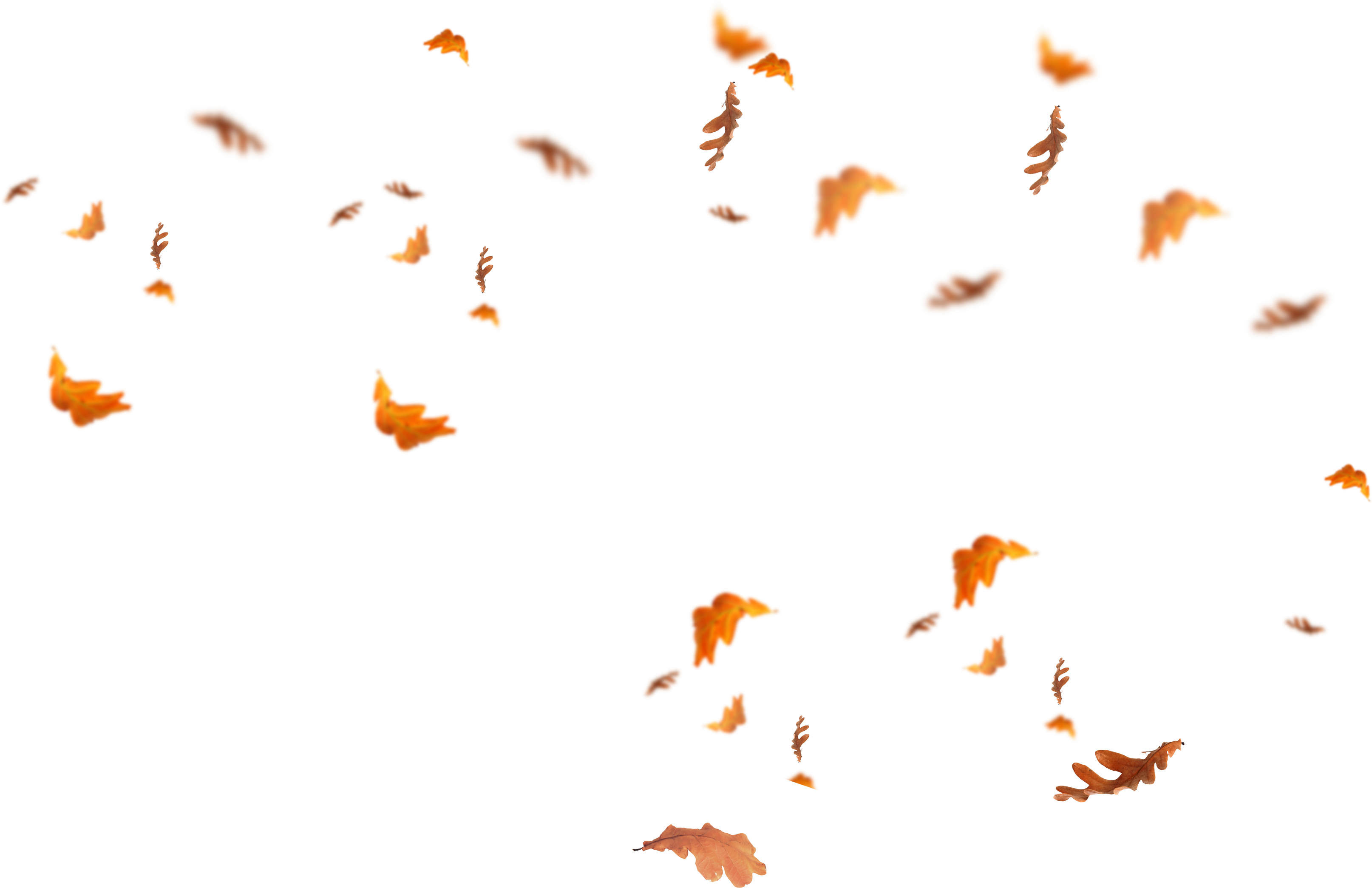 falling leaves png