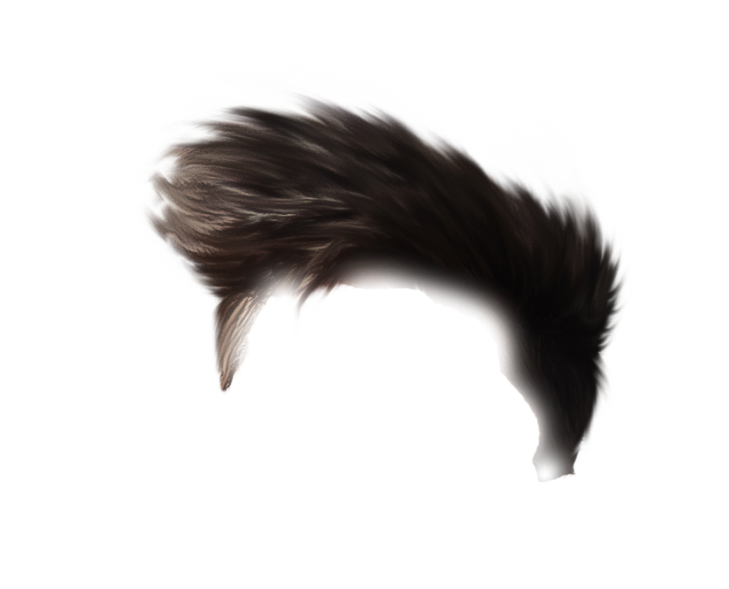 hairs pnghairs png