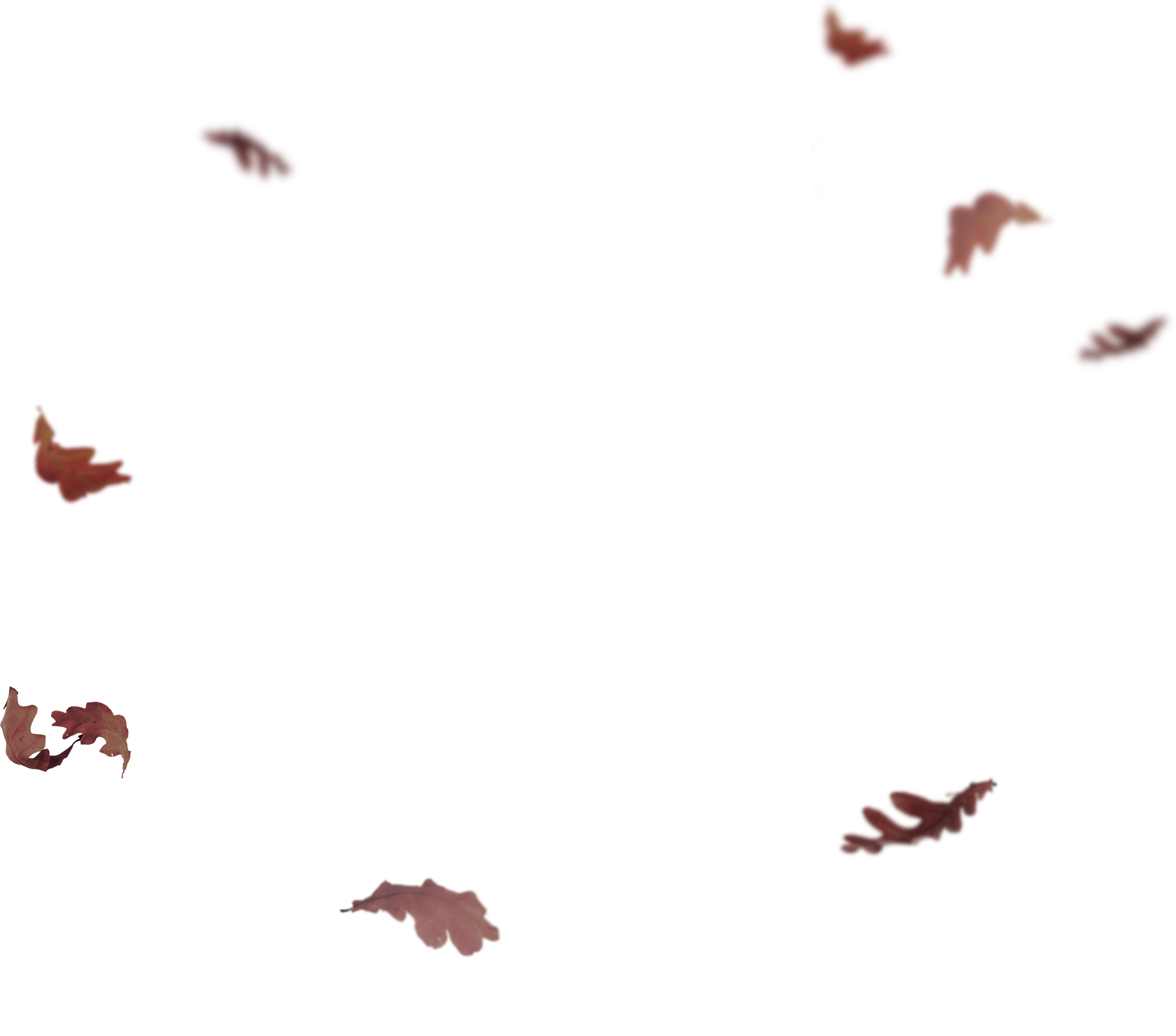 flying leaves png