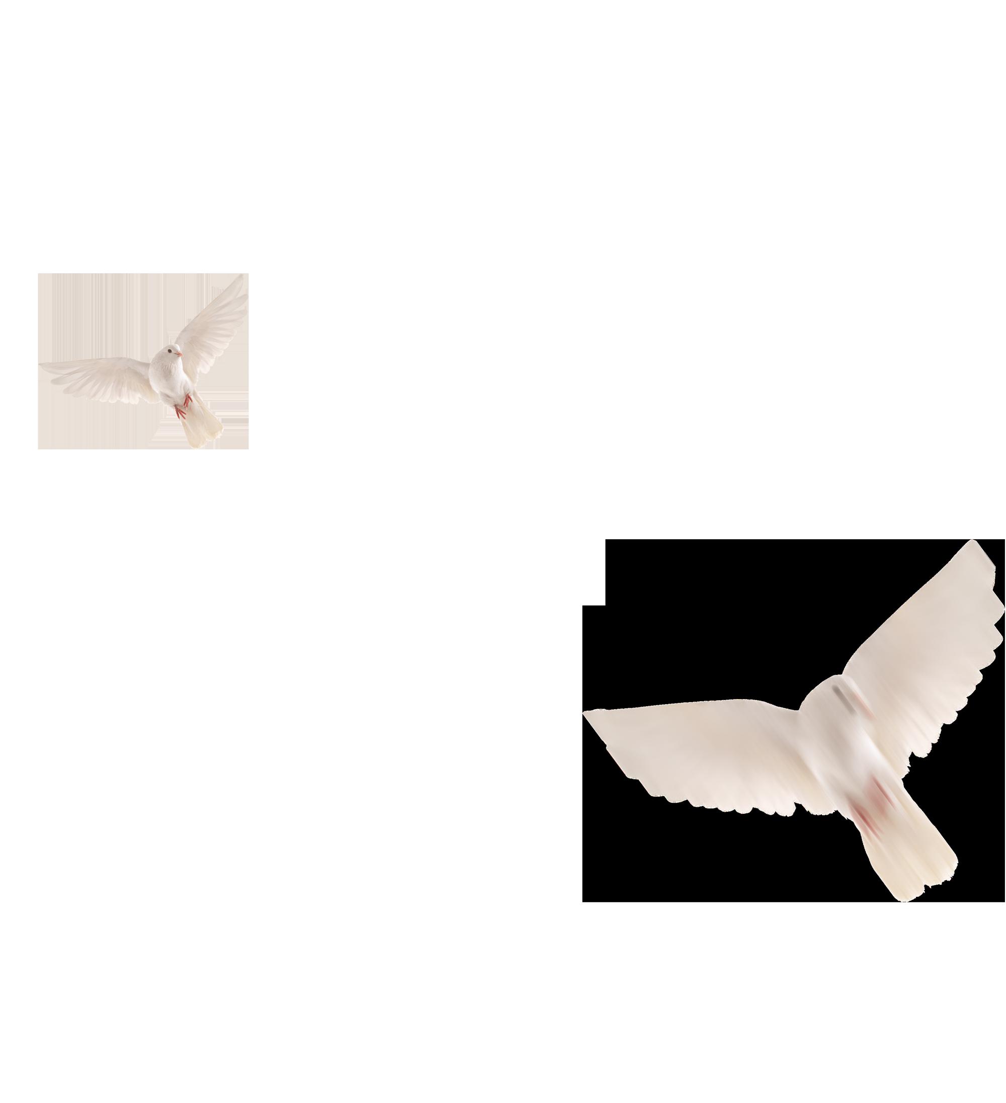 birds-png