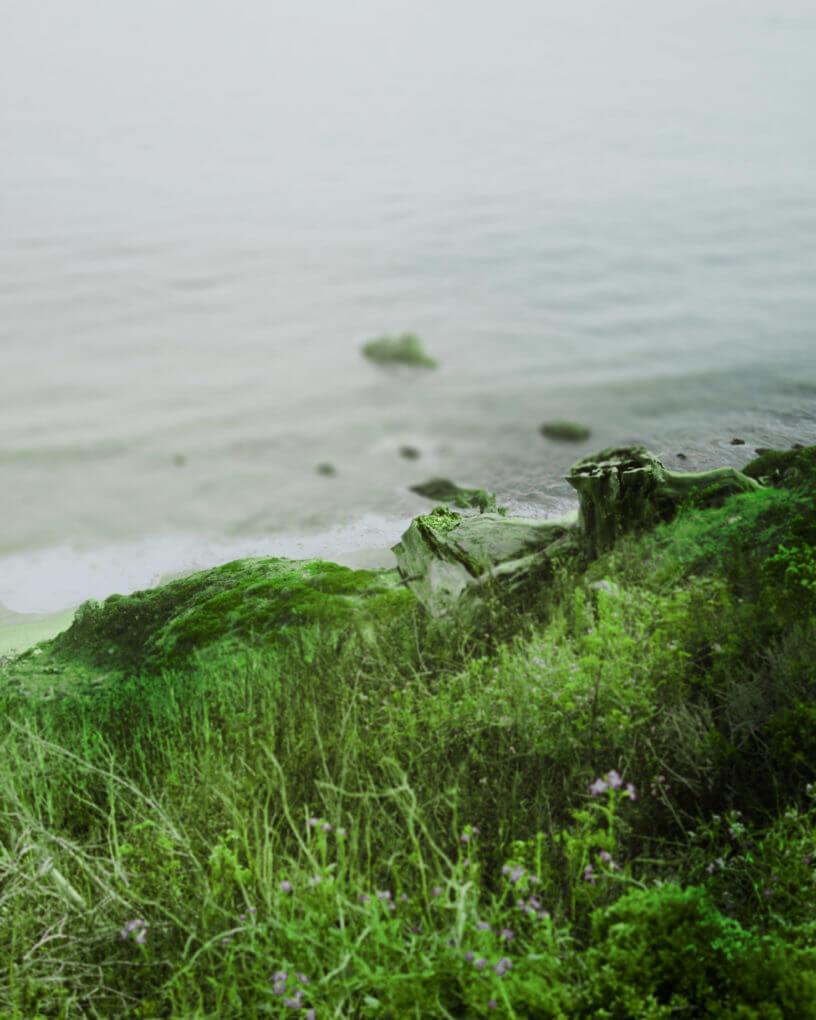 green feild background