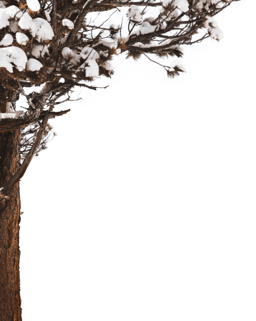 snow-tree-png